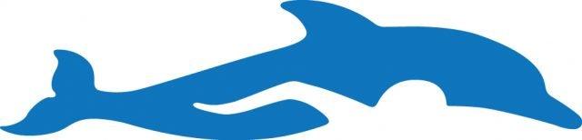 ymca dolphins logo